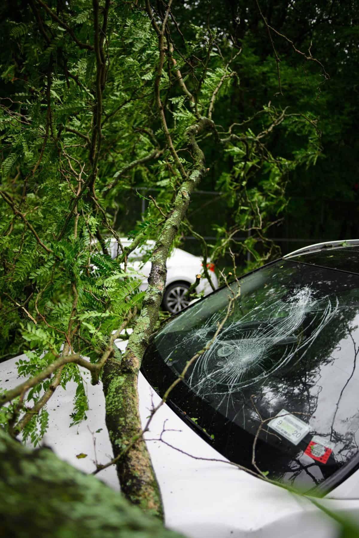 רכב נכנס בעץ